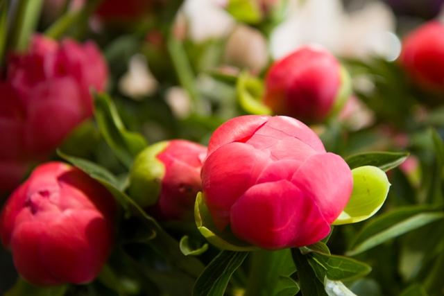 Fleuriste aix en provence puyricard st phane t venin for Fleuriste proche