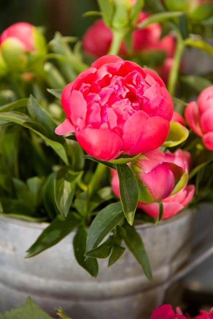 fleuriste aix en provence puyricard st phane t venin fleuriste par passion. Black Bedroom Furniture Sets. Home Design Ideas